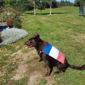 """Beeah der Rettungshund """"rettet"""" die Normandie"""