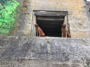 Ridgebacks on Tour