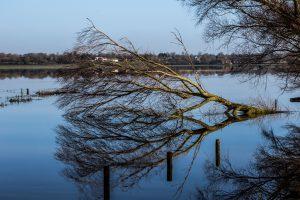 Die Marais des Cotentin – eine unvergleichliche Naturlandschaft